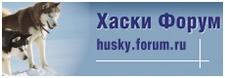 Хаски Форум